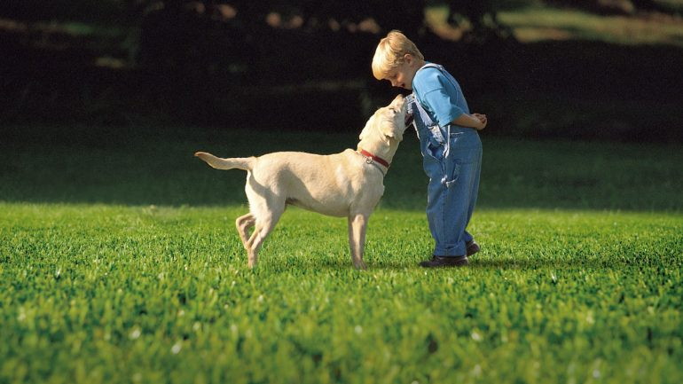 Artifical Grass; Child and pet friendly, no mud or mess!
