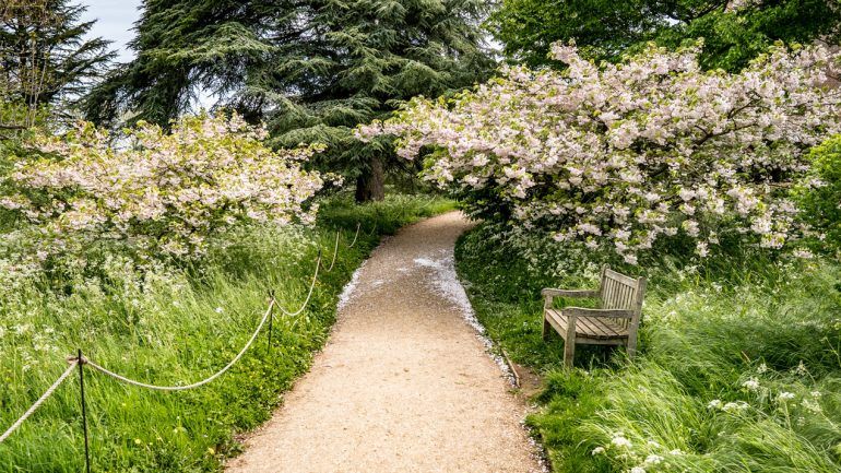 Celebrating blossom with the National Trust