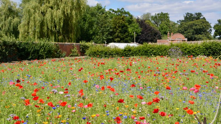 Pop-up flower meadow at The Vyne